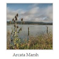 northern california arcada marsh